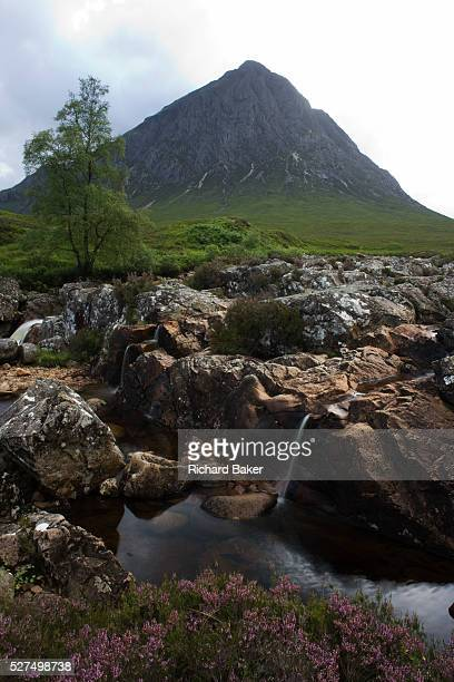 Scottish Stob Dearg mountain and rocky River Coupall amid magical scenery in Glencoe, Scotland. An upright image looking over a clump of native...