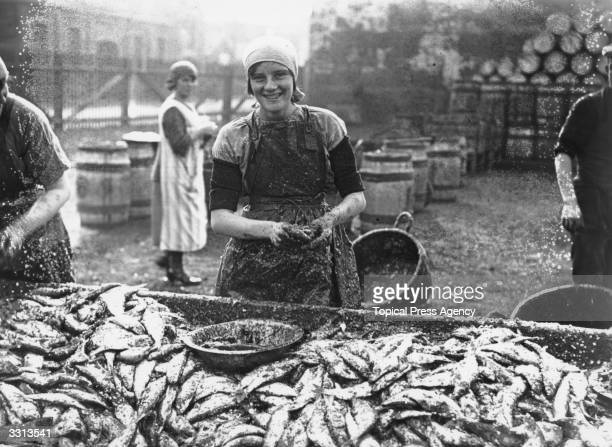 Scottish woman gutting herrings at Great Yarmouth Thousands of women travel from Scotland to Great Yarmouth to process the catch during the autumn...