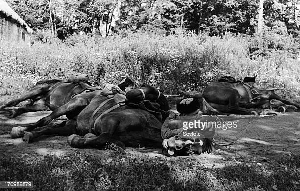 Scouts of the 'x' cossack unit in ambush, august 1942, world war ll.