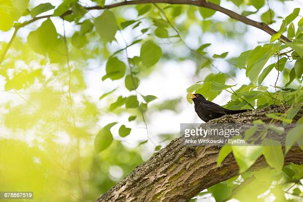 Screaming Bird Perching On Tree Trunk