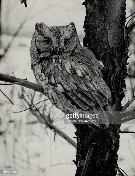 Screech Owl Is inhabited by a pair of swamp sparrows but due to their retiring are seldom seen [Incomplete]