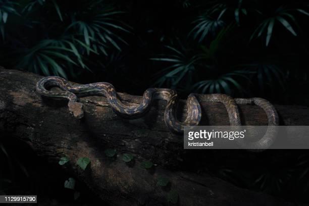 scrub python (morelia amethistina) on a tree trunk at night, australia - python snake stock pictures, royalty-free photos & images