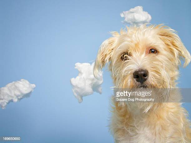 Scruffy Dog Head In The Clouds