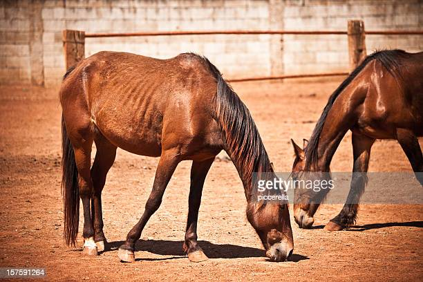 scruffy horses - slim stock pictures, royalty-free photos & images