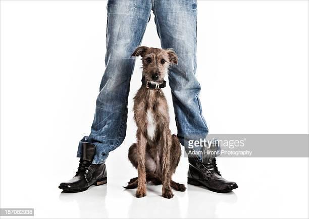 Scruffy looking dog sat between owners legs