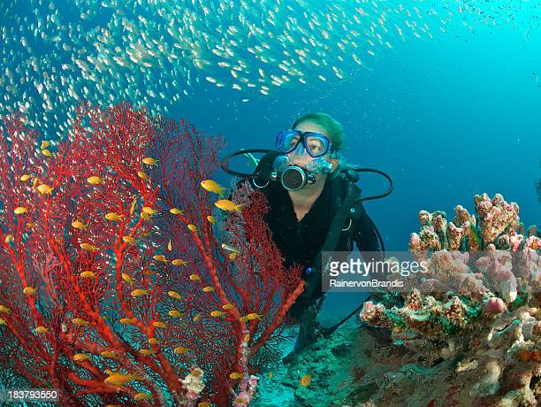 scuba diver admires fish and red fan coral - seychelles stock pictures, royalty-free photos & images