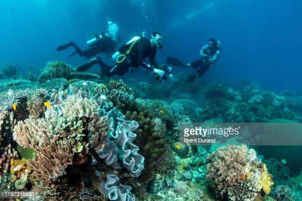 scuba diver and coral reef at apo island - indo pacific ocean stock pictures, royalty-free photos & images