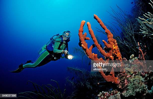 Scuba diver and coral reef, Dominica, French West Indies, Caribbean Sea