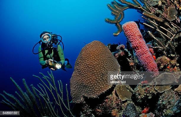 Scuba diver and coral reef Netherlands Antilles Bonaire Caribbean Sea