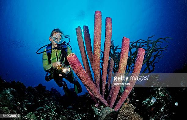 Scuba diver and Lavender Stovepipe sponge, Aplysina archeri, Dominica, French West Indies, Caribbean Sea