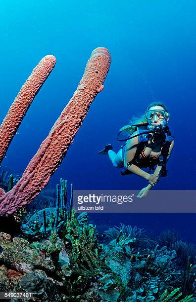 Scuba diver and Lavender Stovepipe sponge, Aplysina archeri, Martinique, French West Indies, Caribbean Sea