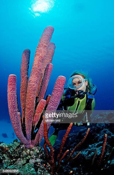 Scuba diver and Lavender Stovepipe sponge, Aplysina archeri, Saint Lucia, French West Indies, Caribbean Sea