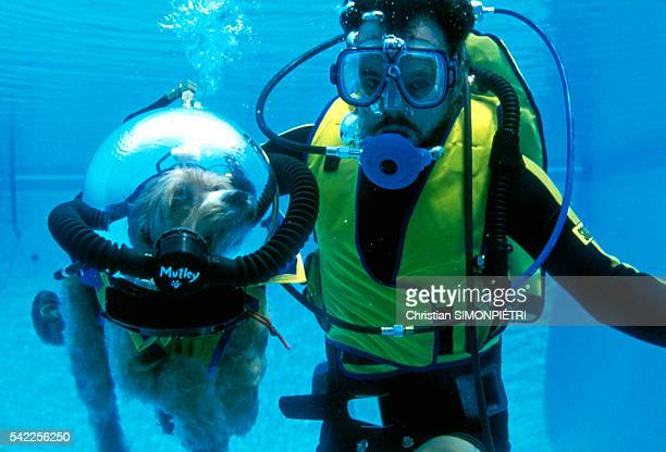 Scuba diver and pet lover Gene Alba training dog, Mutley, in a swimming pool.