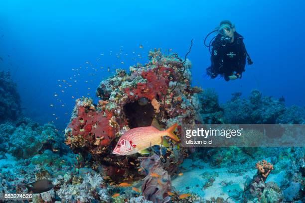 Scuba diver and Squirrelfish Sargocentron spiniferum Red Sea Dahab Egypt