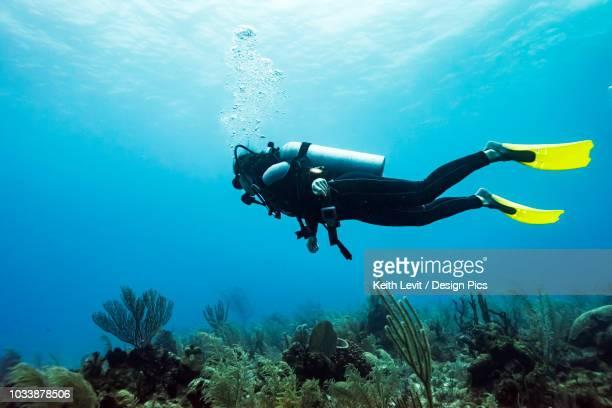 scuba diver at joe's wall dive site, belize barrier reef - sporttauchen stock-fotos und bilder
