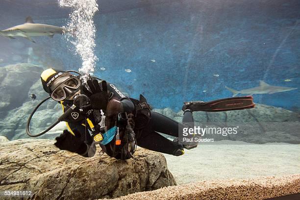Scuba Diver at S.E.A. Aquarium, Singapore