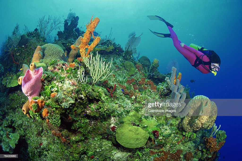 Scuba diver by coral reef : Stockfoto