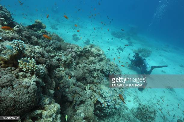 A scuba diver checks coral reefs in the Red Sea off the southern Israeli resort city of Eilat on June 12 2017 Global warming has in recent years...
