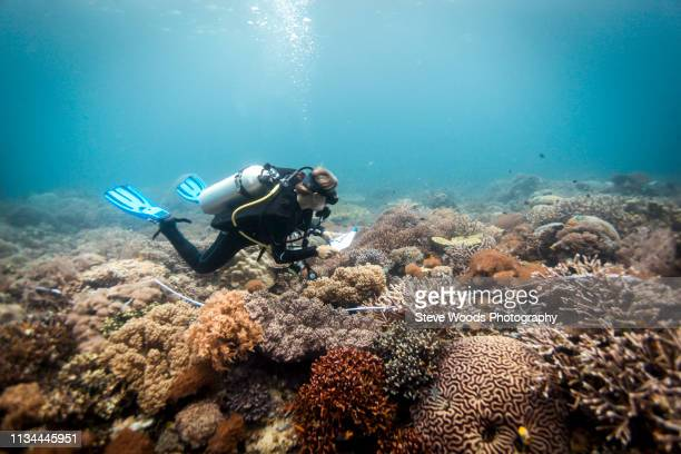 a scuba diver conducts a scientific survey on a coral reef, raja ampat, west papua, indonesia - raja ampat islands stock photos and pictures