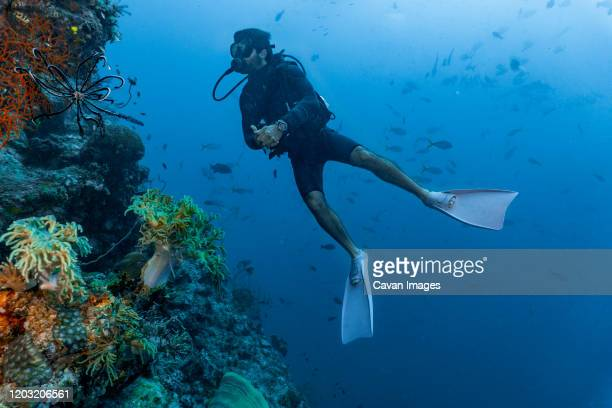 scuba diver exploring the great barrier reef in australia - scuba diving stock pictures, royalty-free photos & images