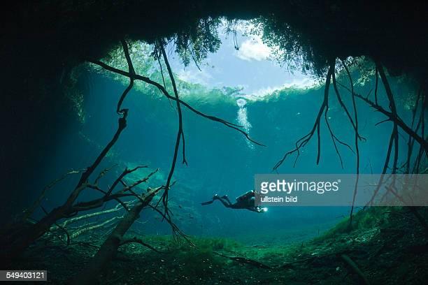 Scuba Diver in Car Wash Cenote Aktun Ha Tulum Yucatan Peninsula Mexico