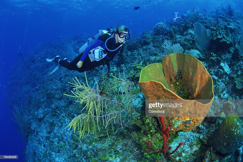 Scuba diver near green barrel sponge : Stockfoto