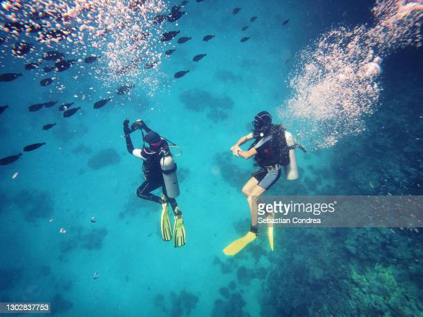 scuba diver near the coral wall, photographing colorful coral reef red sea, hurghada, egypt. - scuba diving stock pictures, royalty-free photos & images