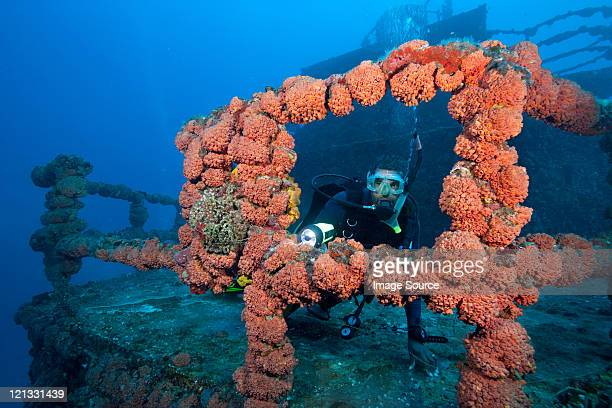 scuba diver on shipwreck - florida keys stock pictures, royalty-free photos & images