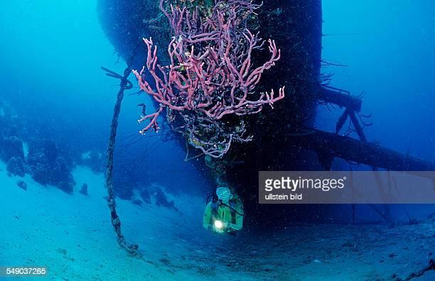 Scuba diver on the Hilma Hooker Ship Wreck, Netherlands Antilles, Bonaire, Caribbean Sea