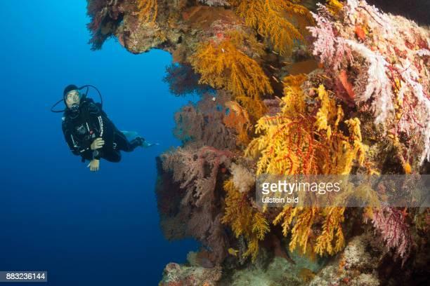 Scuba Diver over Coral Reef, Osprey Reef, Coral Sea, Australia