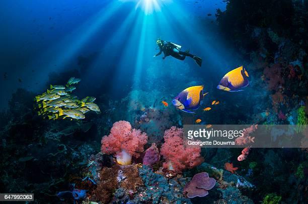 scuba diver over coral reef. - sporttauchen stock-fotos und bilder