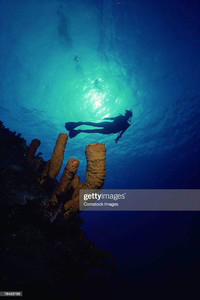 Scuba diver : Stockfoto
