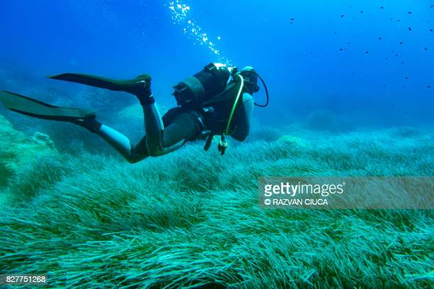 scuba diver - scuba diving stock pictures, royalty-free photos & images