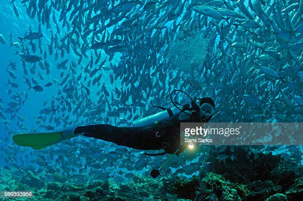 Scuba diver shining a torch by coral reef and school of fish, Borneo Island, Malaysia
