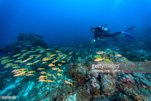 scuba diver swimming in sea - damselfish stock photos and pictures