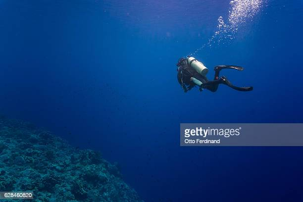 Scuba diver swimming in the sea