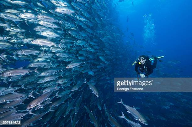 Scuba diver swimming past wall of Jacks, Cocos Island, Costa Rica