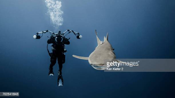 Scuba diver swimming with lemon shark, underwater view