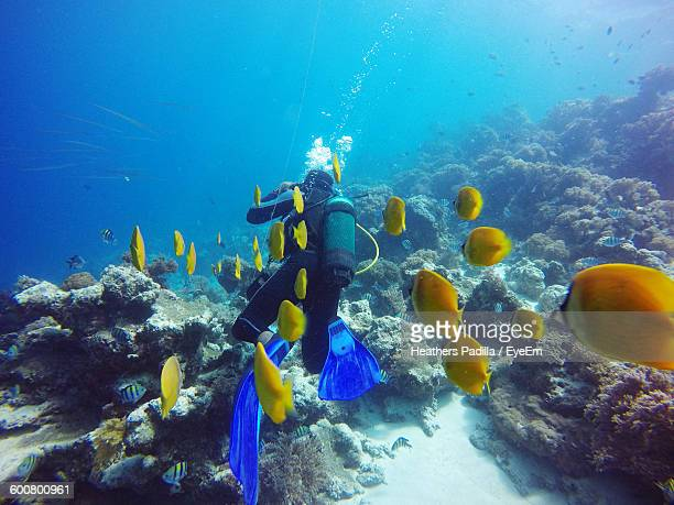 Scuba Diver Swimming With Yellow Fishes In Sea