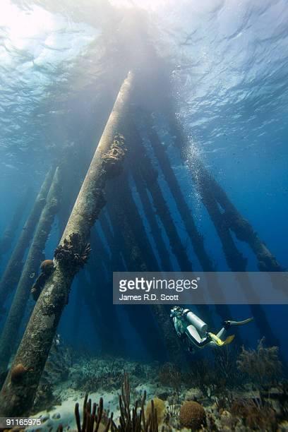 scuba diver under pier - ボネール島 ストックフォトと画像