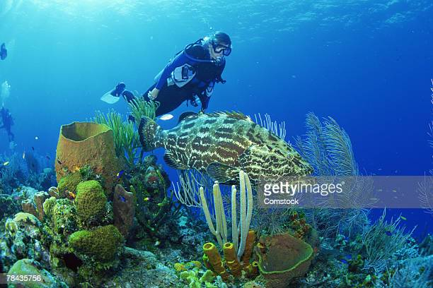 Scuba diver with sea fans and black grouper