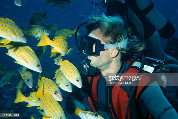 Scuba diver with yellow fish