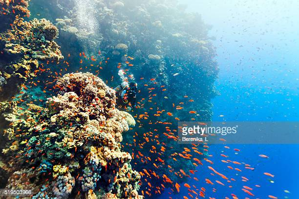 Scuba Operatore subacqueo donna che pigola da dietro barriera corallina.