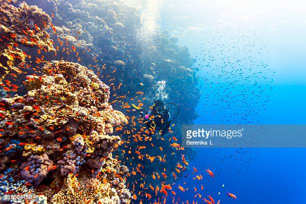 scuba diver woman swims along the reef - reef stock pictures, royalty-free photos & images