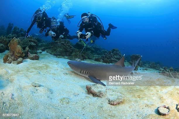 Scuba divers and white tip shark, Cocos Island National Park, Puntarenas Province, Costa Rica