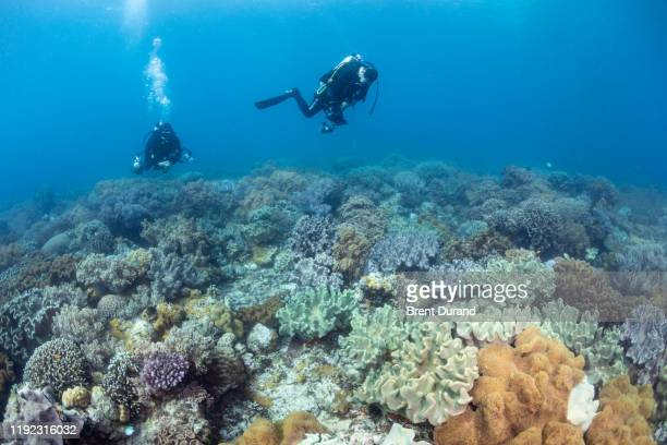scuba divers explore a coral reef at apo island - negros oriental stock pictures, royalty-free photos & images