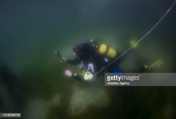Scuba divers in training session is seen in Istanbul, Turkey on June 11, 2020. SCUBA diving centers, in which theoretical and practical courses...