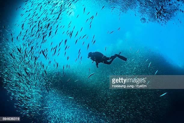 scuba divers swimming in between school of fish undersea - school of fish stock pictures, royalty-free photos & images