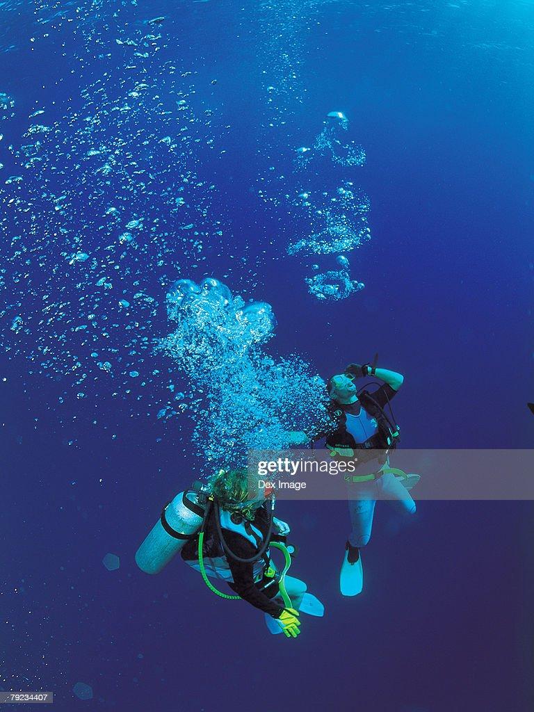 Scuba divers underwater : Stock Photo