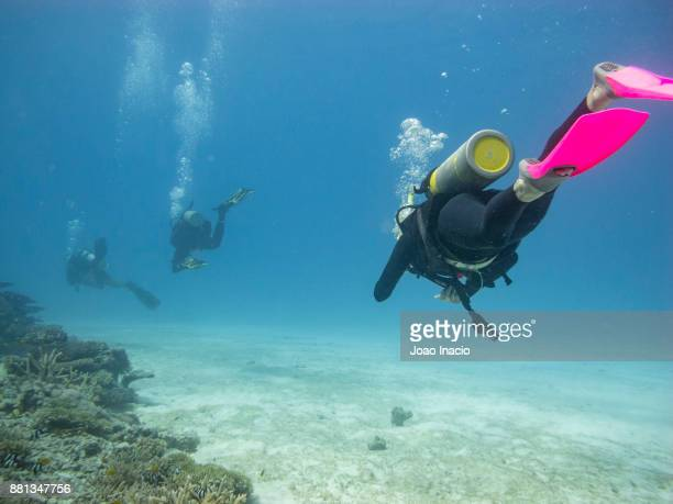 scuba diving at lodestone reef, great barrier reef, australia - townsville queensland stock pictures, royalty-free photos & images